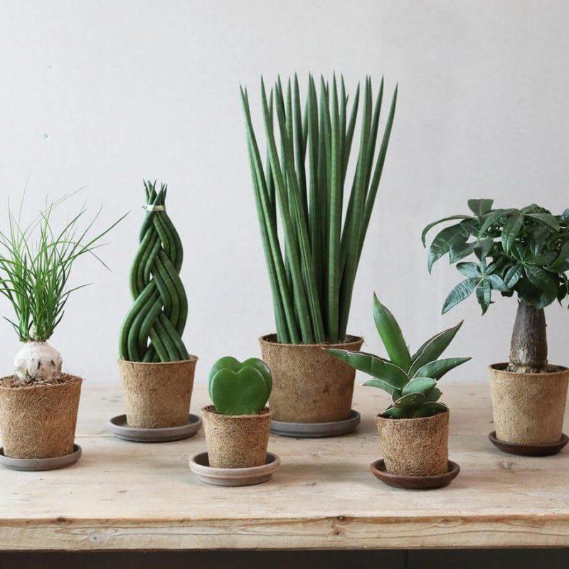 サスティナブル 観葉植物