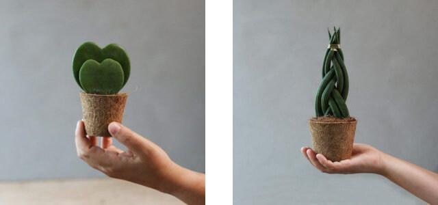 観葉植物 ココナッツコイア繊維ポット